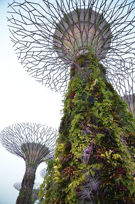 シンガポール旅行の話1